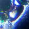Слайд из набора для опытов Levenhuk под микроскопом Levenhuk LabZZ MT2